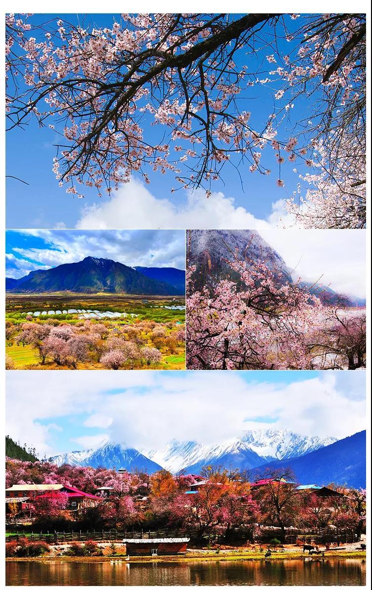 2019年3月23—31日拼西藏雪域桃花拉萨林芝9天行3.jpg